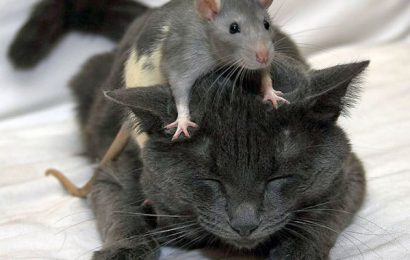 The Cat And Mouse Game of Federal Budgeteering